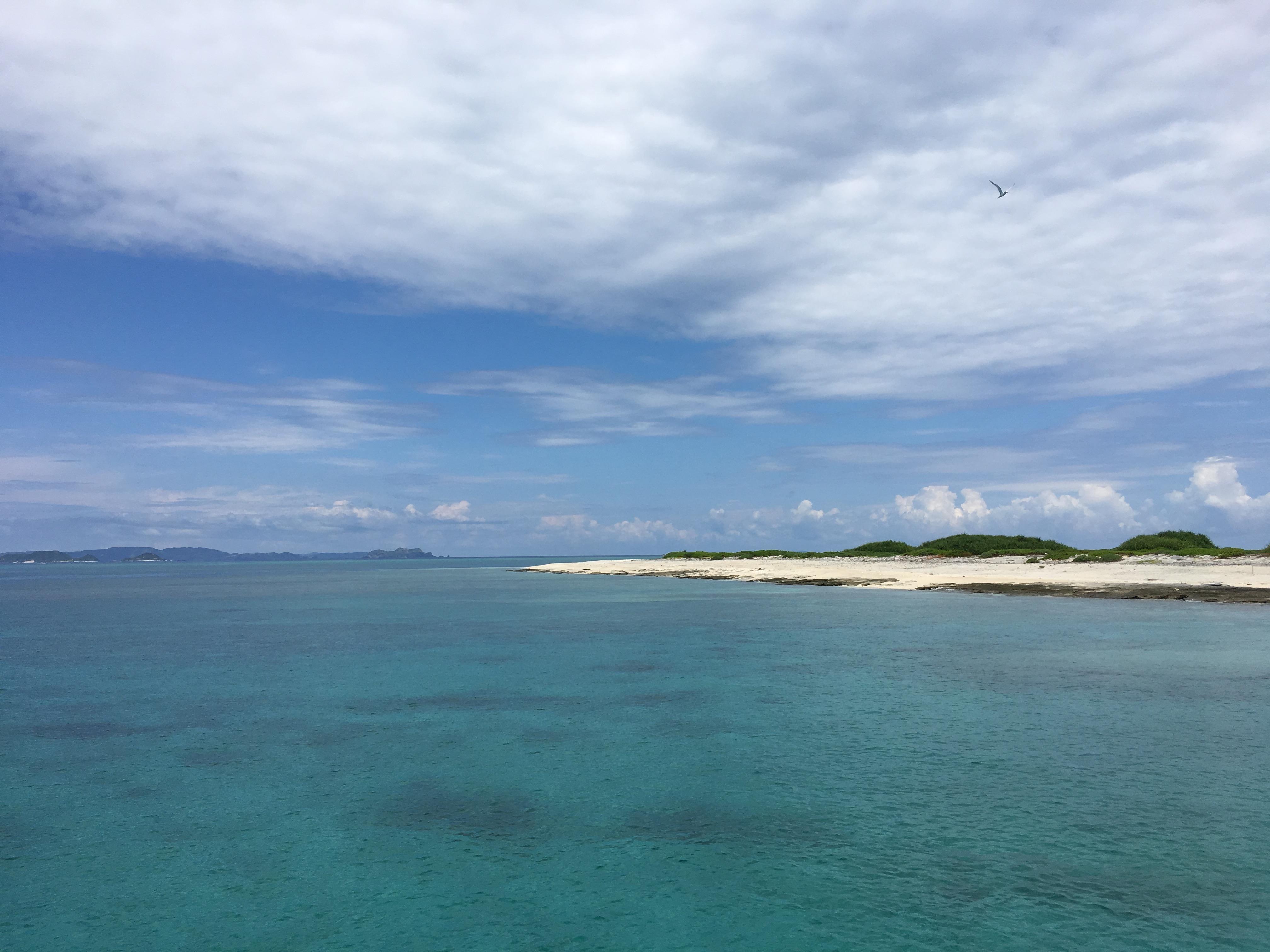 船20分!ケラマ諸島ナガンヌ島でシュノーケリング!